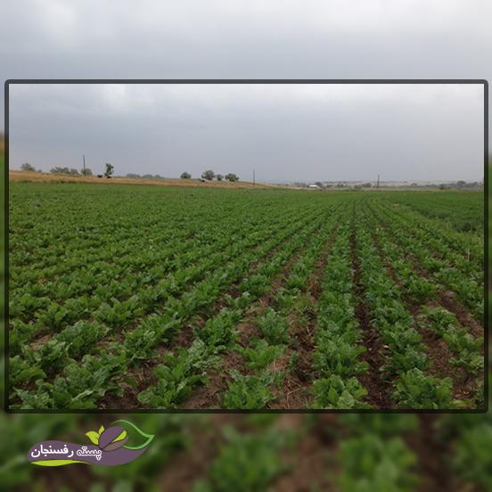 آشنایی با اصول کشاورزی و دیم کاری در ایران