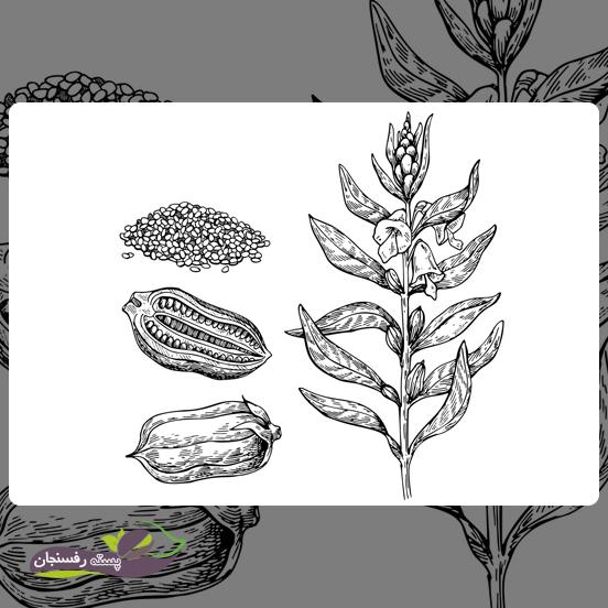 مقدار فسفر مورد نیاز گیاه کنجد بستگی به چه عواملی دارد؟