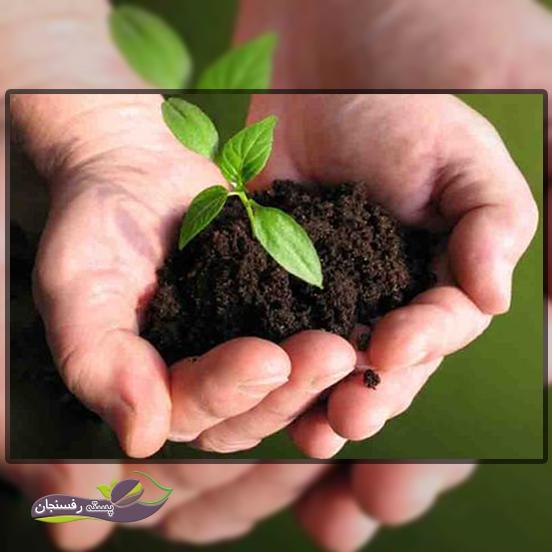 روش تیمار بذر در کشاورزی