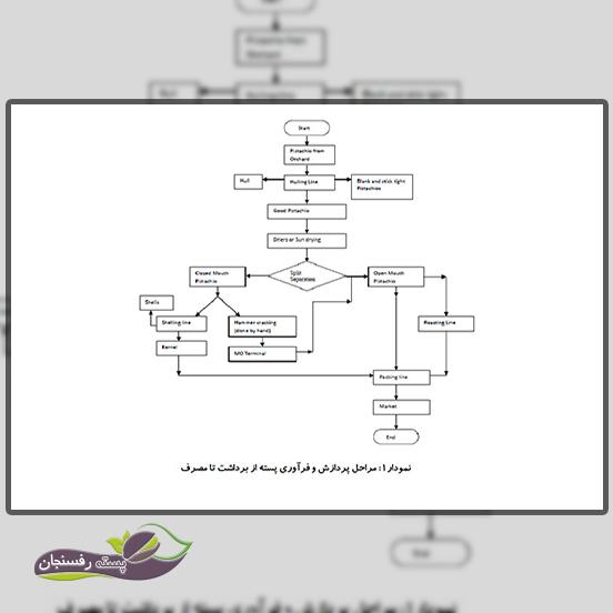 مراحل پردازش و فرآوری پسته در ایران