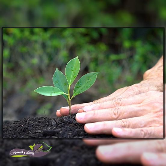 استفاده از اسید فولیک اسید ارگانیکی برای رشد بهتر محصولات زراعی