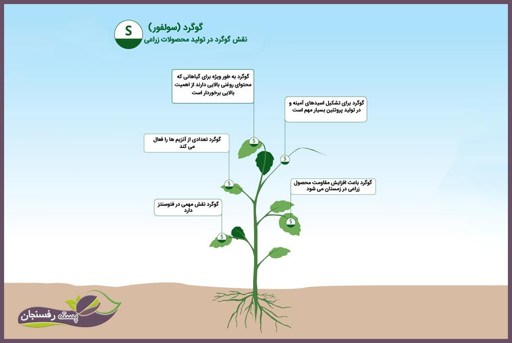 نقش گوگرد در تولید محصولات زراعی