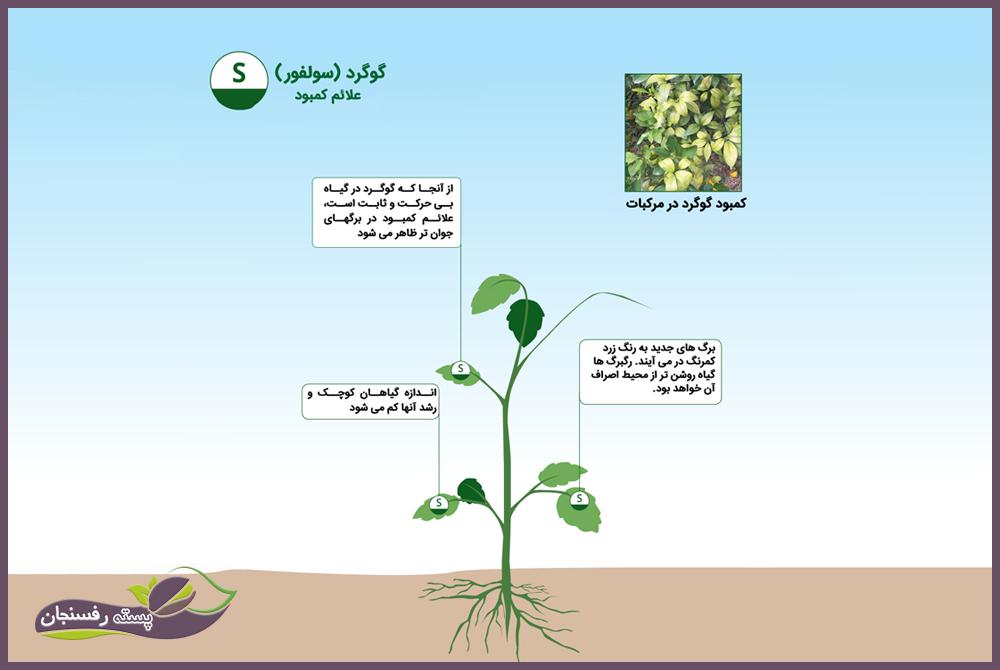 علائم کمبود گوگرد در گیاهان