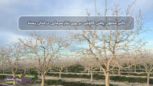 تاثیر محلول پاشی کائولین بر روی نیاز سرمایی درختان پسته