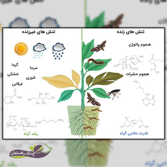 انواع تنش های گیاهان زراعی