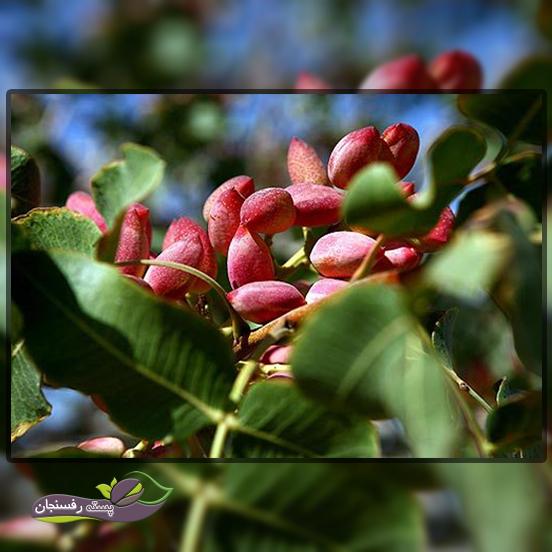 6. به نظر شما اخذ گواھی ارگانیک برای محصولات و نھاده ھای کشاورزی چه اھمیتی دارد؟