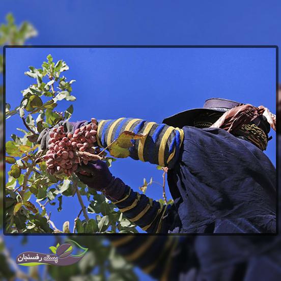 5. چرا کشاورزی ما در روشھای سنتی باقی مانده است؟