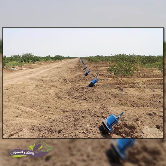 اقلیم و خاک مناسب کشت پسته