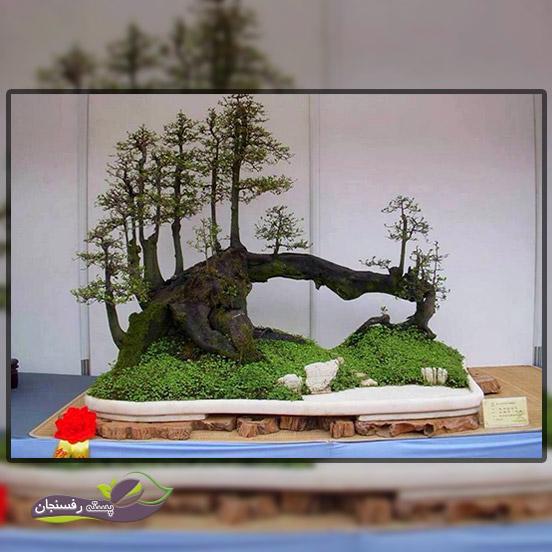 درختچه های بونسای قایقی (Raft Bonsai style (Ikadabuki