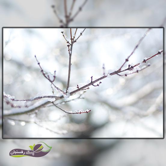 چگونه با آبیاری در زمستان از درختان خود در برابر سرما محافظت نمائیم؟