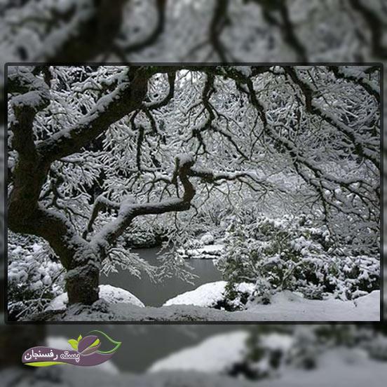 بهترین زمان برای آبیاری درختان در فصل زمستان