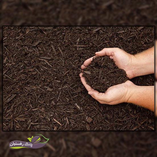 آبیاری درختان در زمستان به چه صورت انجام می شود؟