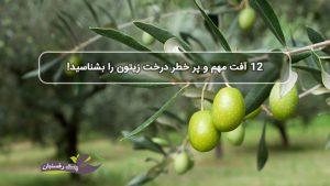 12 آفت مهم و پر خطر درخت زیتون را بشناسید!