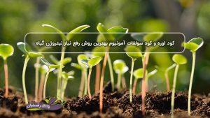 کود اوره و کود سولفات آمونیوم بهترین روش رفع نیاز نیتروژن گیاه