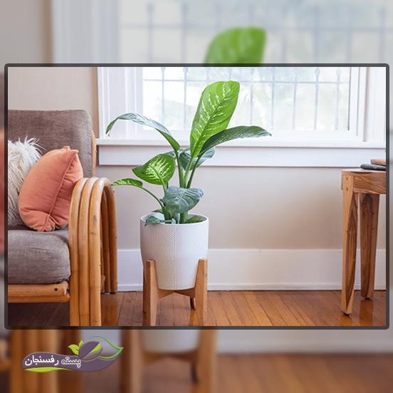 نور مناسب برای گیاه دیفن باخیا