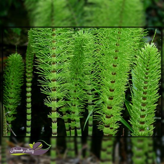 گیاهان قدیمی 6