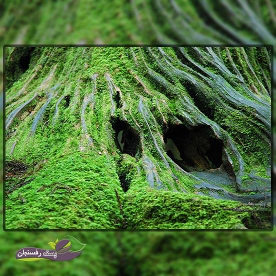 گیاهان قدیمی 8